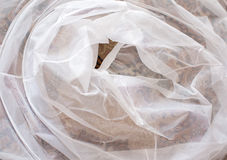 White veil. Stock Image