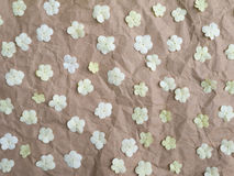 White viburnum flowers Royalty Free Stock Images