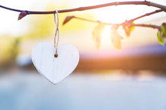 White vintage wooden heart hanging from tree branch. Valentines Day. Blurred background and copy space. White vintage wooden heart hanging from tree branch Royalty Free Stock Image