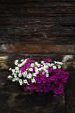 White and violet flowers covering window of wooden log cabin Royalty Free Stock Photo