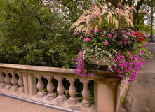 White and Violet flowers on Railing Corner Stock Image