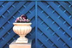 Flower Bucket with Blue Fence royalty free stock photography