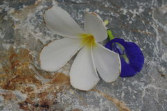 White and violete flowers on stone surface Royalty Free Stock Photo