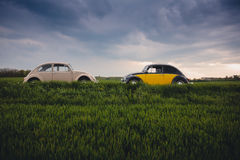 White Volkswagen Beetle in Front of Black and Yellow Volkswagen Beetle during Daytime Royalty Free Stock Photos