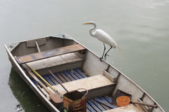 White Wading Bird. A White Wading Bird on top of a boat in Sao Paulo zoo, Brazil Royalty Free Stock Photography