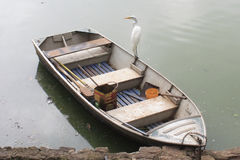 White Wading Bird - Sao Paulo Zoo. A White Wading Bird on top of a small boat in Sao Paulo zoo, Brazil Stock Photo