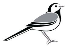 White Wagtail. Stylized White Wagtail - vector illustration Royalty Free Stock Images
