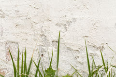 White wall with damaged plaster layer, in front grows a rare green grass. Abstract background Royalty Free Stock Photos