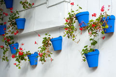 White wall decorated with beautiful blue flower pots Stock Photography