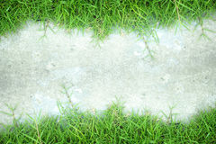 White wall and green grass background Stock Photography