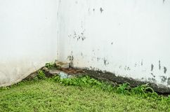 White wall with green leafy soil, broken white texture of an old and worn wall stock images