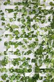 White wall with green leaves. In cafe Stock Images