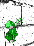 White wall. Green plant and white wall. Beautiful  illustration Royalty Free Stock Photography