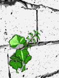 White wall. Green plant and white wall. Beautiful  illustration Stock Photo