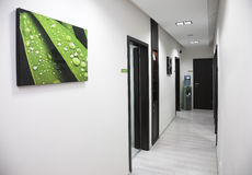 White wall hallway, wet green leaf image hanging. Hallway, doors, picture on wall, water automate Royalty Free Stock Images
