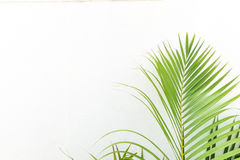 White wall and plant Stock Photos