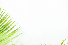 White wall and plant Royalty Free Stock Images