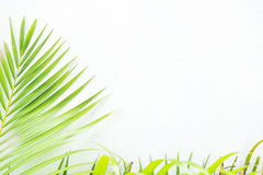 White wall and plant Stock Photography