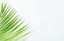 White wall and plant Royalty Free Stock Photos