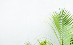White wall and plant Royalty Free Stock Photo