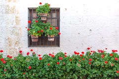 White Wall and Red Flowers Stock Images