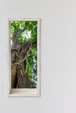White wall window with big tree background. Royalty Free Stock Photography