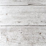 White walnut wood Texture Royalty Free Stock Images