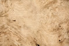 White walnut wood texture Stock Photo