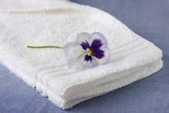 Free White Washcloth With Purple Petunia Royalty Free Stock Photo - 14216175