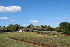 White washed conical roofed building in a field on a farm in the area of Cisternino / Alberobello in Puglia Italy. Traditional white washed conical roofed royalty free stock photos