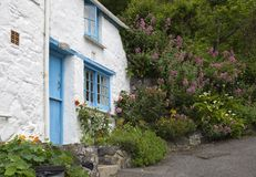 White-washed, stone cottage surrounded by Red Valerian, Cadgwith, Cornwall, England Stock Photography