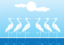 White Water Birds Standing One Leg Stock Photography
