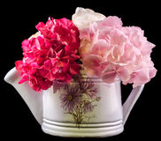 White water can with hydrangea, hortensia flowers close up, isolated Stock Image