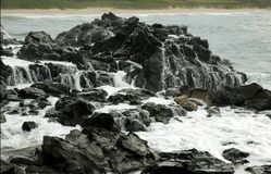 White Water on Lava Rock. White salt water flowing off black lava rock Royalty Free Stock Photos