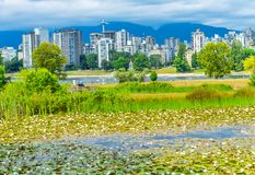 White Water Lilies Pond Vanier Park Vancouver British Columbia C. Anada Pacific Northwest Stock Photography