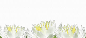 Water lily floral banner Royalty Free Stock Images