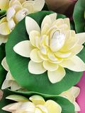 White Water Lily. Flowers Background Stock Photos