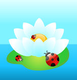 White water-lily with funny ladybird Stock Image