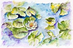 White water lily in small pond Royalty Free Stock Photo