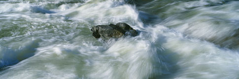 White water on Payette River Royalty Free Stock Images