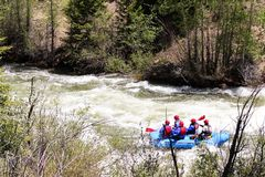 White water rafting on the Blue River. Paddling for glory through the white water of the Blue River near Silverthorne Colorado stock images