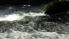 White water river flowing in New Zealand. Footage of a fast, natural, white water rapids river flowing in New Zealand. Shot in amongst native New Zealand trees stock video