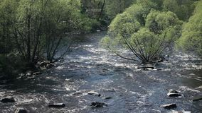 White water Roll on fast  river. Aerial view, Spring landscape, Fresh green trees stock footage