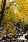 White water stream in fall Royalty Free Stock Images