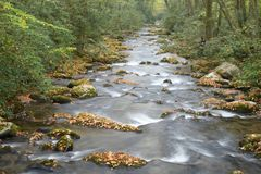 A white water stream rushes through a changing landscape in early fall. Stock Images