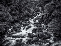 White water stream rushes over boulders in the Fiordland of New Zealand with textural vegetation in black and white stock photo