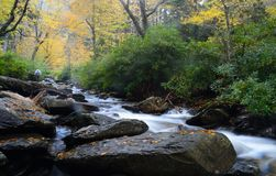 White water stream in the Smokies is surrounded with fall colors. Royalty Free Stock Images