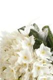 White wedding bouquet Royalty Free Stock Photos