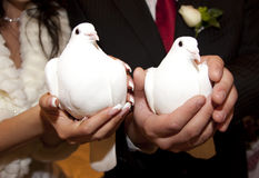 White wedding doves Stock Images