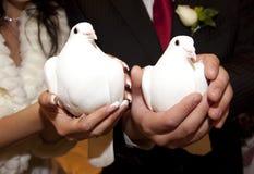 White wedding doves. Wedding simbols stock images